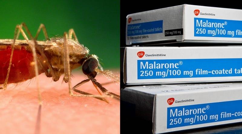 Opakowania Malarone.