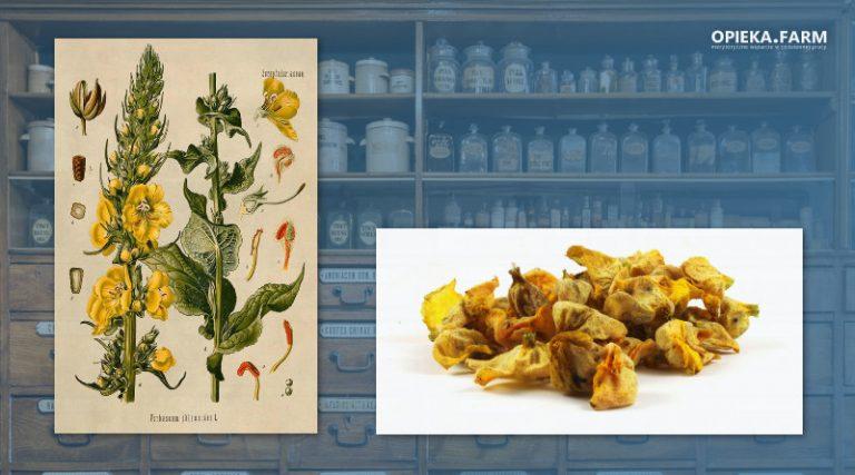 Dziewanna drobnokwiatowa – Verbascum thapsus