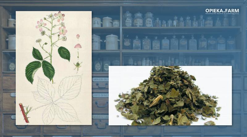 Jeżyna fałdowana – Rubus plicatus