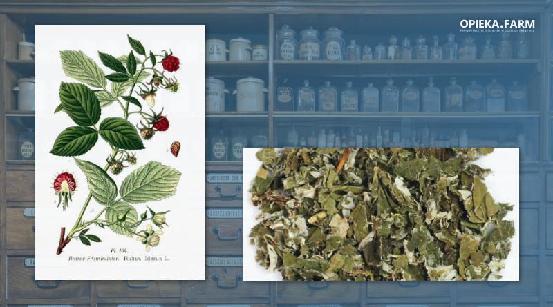 Malina właściwa – Rubus idaeus
