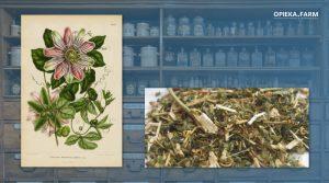 Męczennica cielista – Passiflora incarnata