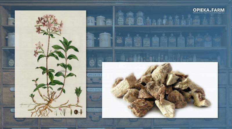 Mydlnica lekarska – Saponaria officinalis
