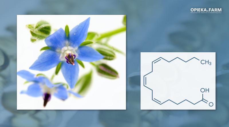 Ogórecznik lekarski i wzór kwasu gamma-linolenowego (GLA)