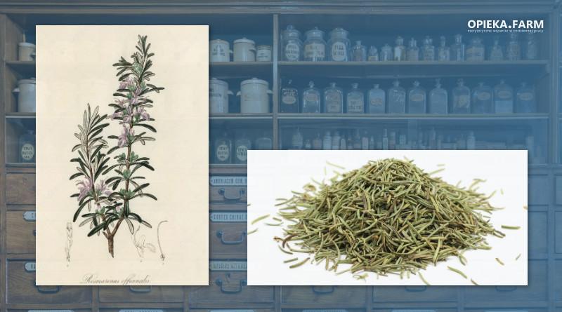 Rozmaryn lekarski – Rosmarinus officinalis