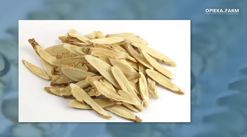 Astragalus membranaceus [Fisch.] Bunge