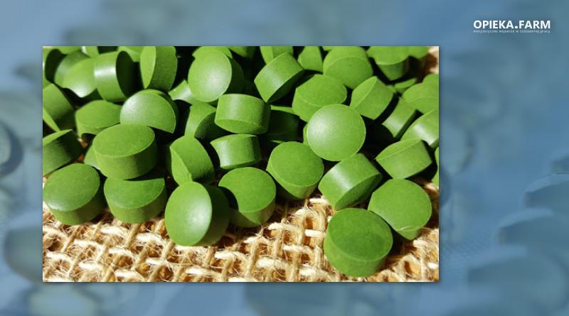Zielona alga