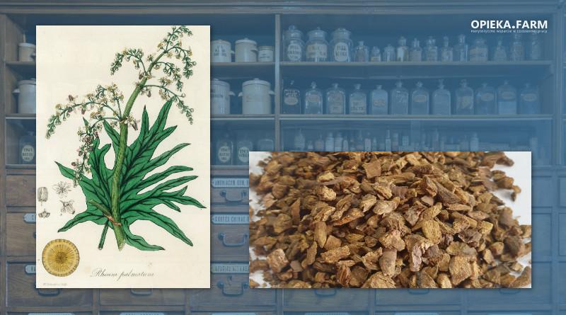 Rzewień dłoniasty - Rheum palmatum