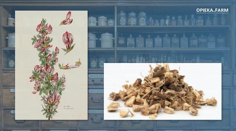 Wilżyna ciernista - Ononis spinosa