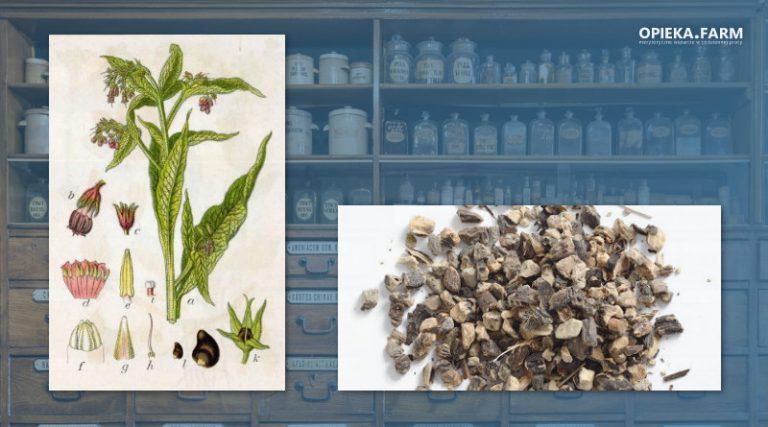Żywokost lekarski – Symphytum officinale