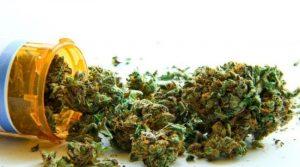 Konopie indyjskie są zwyczajową nazwą jednego z podgatunków konopi siewnych - Cannabis sativa L. subsp. indica.